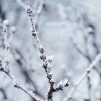 Зима :: Ирина Данилова