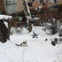охота 2 :: Владимир Павлов