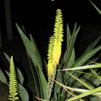 цветы :: ирина слобина