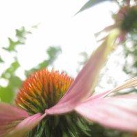 цветочек :: анна викторовна
