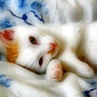 Мой кот :: Антон Котов