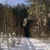 Зимний лес 2 (Пинск) :: Сергей Корольчук