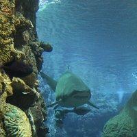 Не дразните акулу :: Лена Паршина