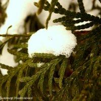 Снежинка :: Виктор Николенко
