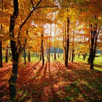 Осень :: Anatolie Poiata