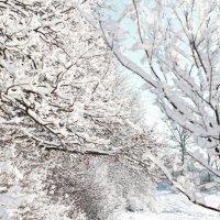 Winter :: Tanya Syrova