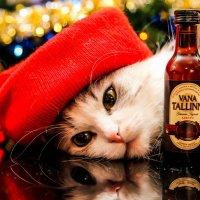 ох уж, эти праздники... :: Ljudmila Myall