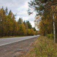 Дорога в осень :: Наталия Зыбайло