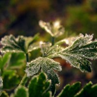 Последняя зеленая трава. :: ольга хадыкина