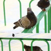 Кот делает вид,что идет мимо :: Таня Харитонова