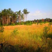 Осень на Хортице :: Алексей Киреев