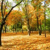 Осень :: Алексей Киреев
