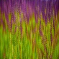 Травы полевые :: Владимир Ноздрачев
