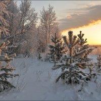 Про морозное солнце декабря... :: Андрей Воробьев