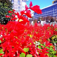 Цветы :: Марина Валерьева