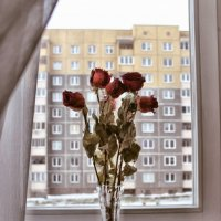 увядать вместе с розами :: Ирина Рацкевич