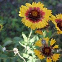 цветы :: Алексей Тедеев