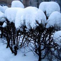 Снежные шапки :: Алла Губенко