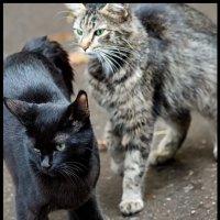 Кошки :: DR photopehota