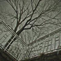 Дерево :: Алексей Савельев