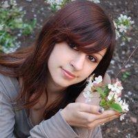Цветение вишни :: Владимир Сергиенко