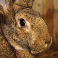 портрет кролика из зазеркалья)) :: Роман Капустинский