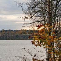 Последние листья :: Наталия Зыбайло