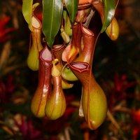 Фестиваль орхидей :: Юрий Ковалев