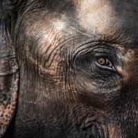Глаз слона :: Mike Kolesnikov