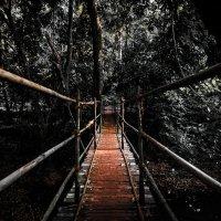 Мост в Джунгях :: Mike Kolesnikov