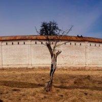 Монастырская стена :: Владимир Ноздрачев