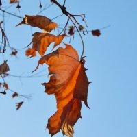 Осень . :: Игорь Абрамов