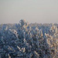 утро в лесу :: Александр Осовской