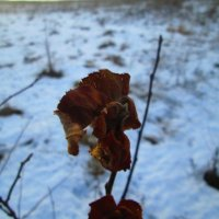 Зима :: Юлия (Григория) Григорьева