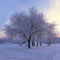 Зима Сибирь :: Михаил Барамович