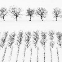 Про жизнь деревьев :: Anatolie Poiata