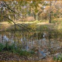 Осень в Ботаническом саду :: Василиса Никитина