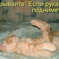 котяра :: наталья боковец