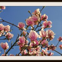 Весеннее цветение :: igor G.