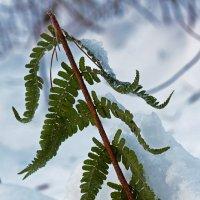Внезапнаяя зима :: Kimiko (= Евгения)