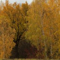 Осенняя пора :: Igor Epikhin