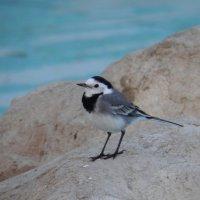 египетская птичка :: Александр Кузин