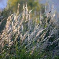 Трава :: Наталия Зыбайло