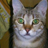 Кошка :: Igor Vecherinsky