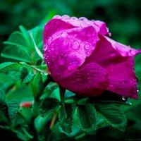 после дождя :: Александр Бобков