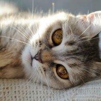 Релаксация по-кошачьи :: Алексей Санаев