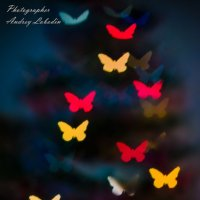 Butterfly light :: Андрей Лободин