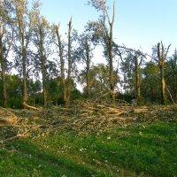 Ураган прошелся :: Igor Vecherinsky
