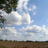 Облака над полем :: lara461