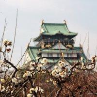 Дворец императора. (Осака.Япония) :: Марина Жужа